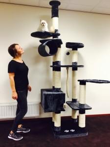 Kratzbaum für schwere Katzen