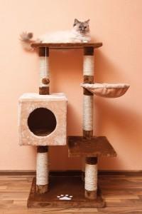Kratzbaum für große Katzen test